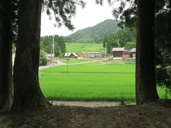 shitada s (15).JPG